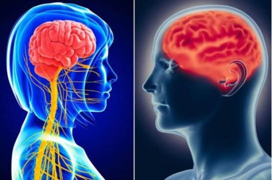 पुरुषमा भन्दा १० गुणा बढी न्यूरोन महिलामा