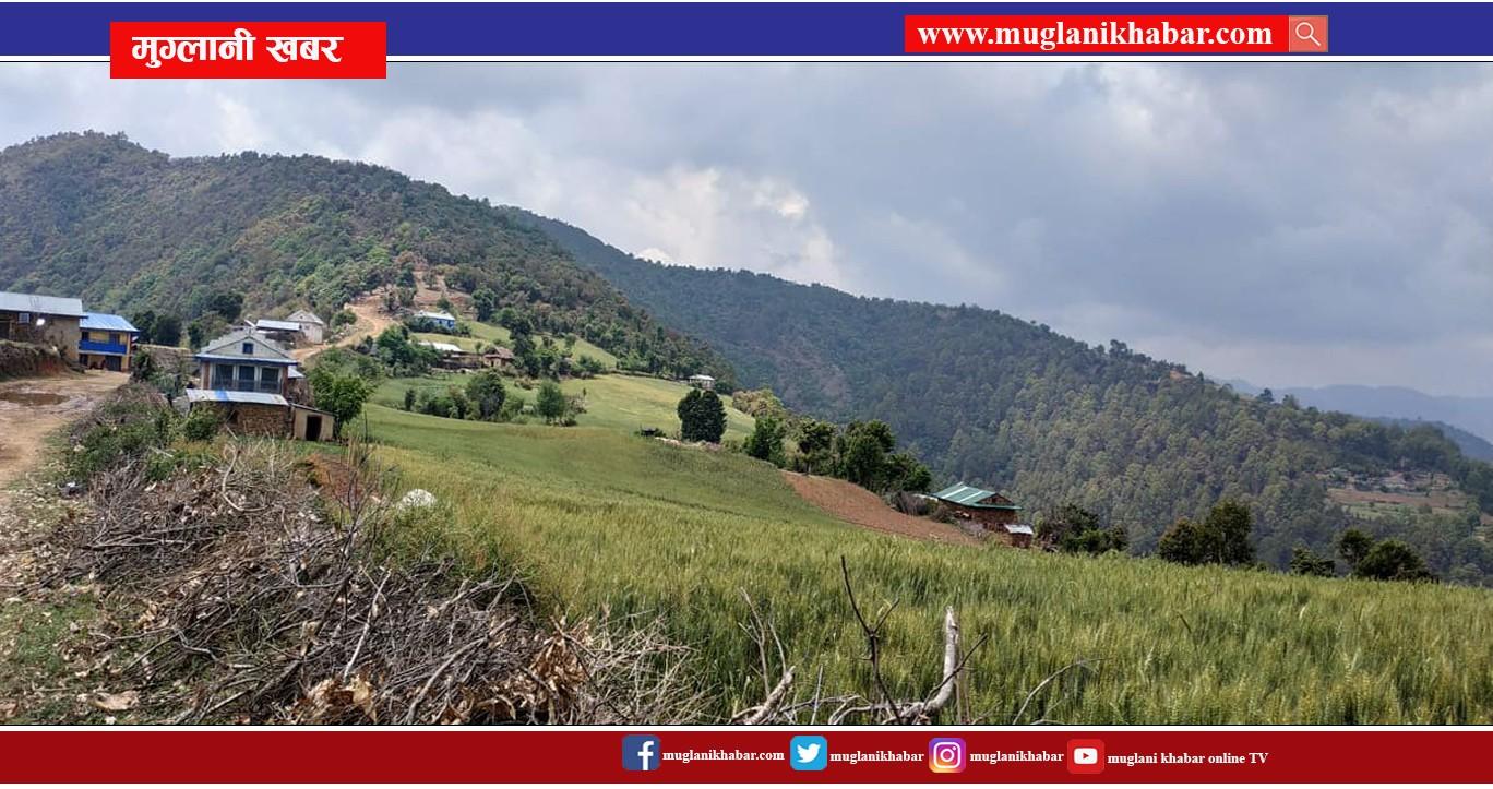 Muglani khabar Pictures