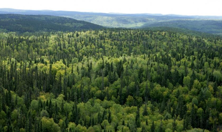 समृद्धिका लागि सामुदायिक वन
